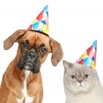 German Boxer and cat in party hat