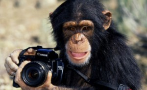monkeywithcamera